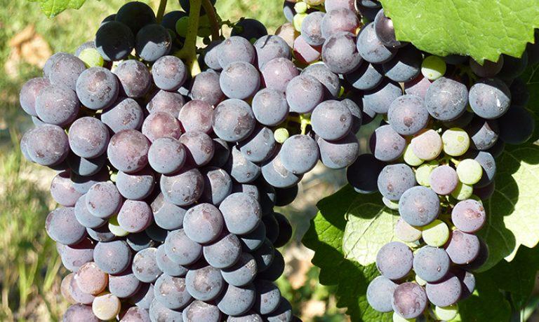 """Informazioni generali sul vino """"Montasso"""""""