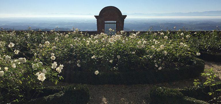 The Montasso vineyard